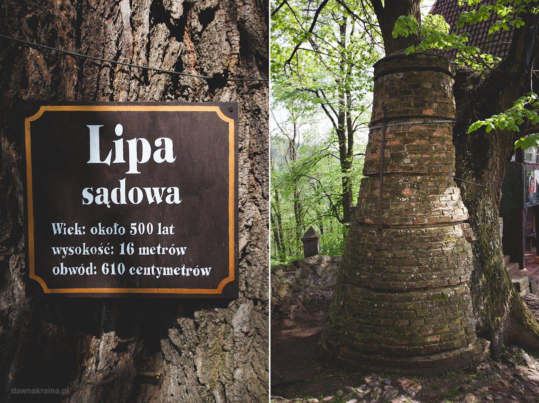 lipa-sadowa