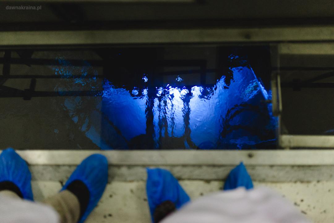 widok na rdzeń i promieniowanie Czerenkowa w reaktorze Maria