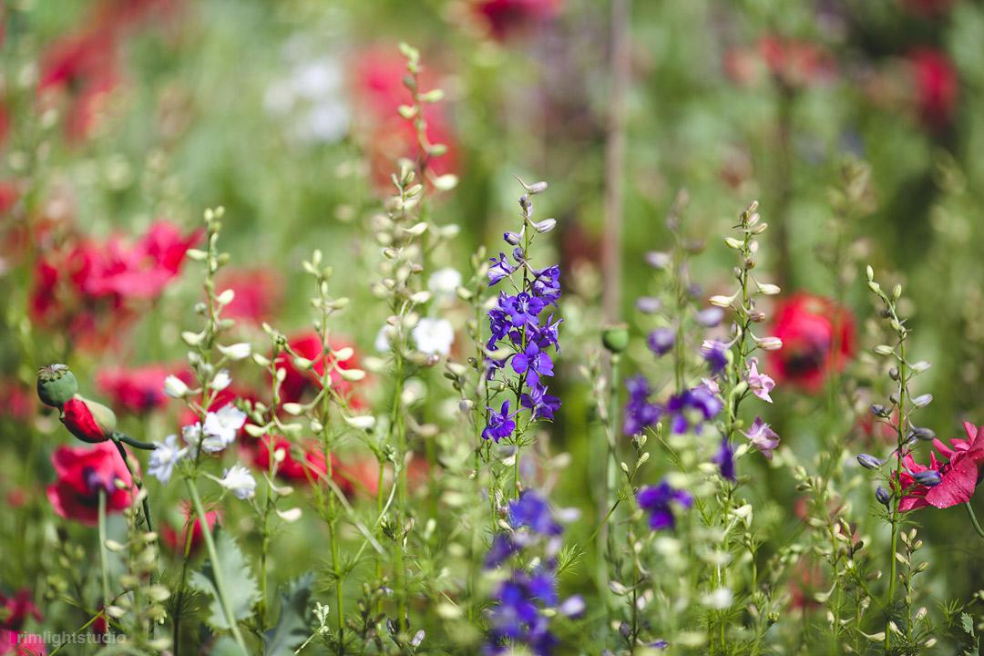 Ogródek w Gościńcu zawsze pięknie kolorowy :)