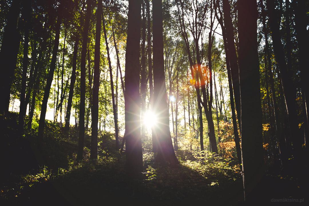 Ścieżka przyrodniczo dydaktyczna w Leszczynie. Skanen górniczo-hutniczy w Lesczynie