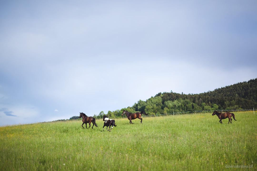 Plener fotograficzny podczas kursu fotografii dla dzieci. Stadnina koni Tara.