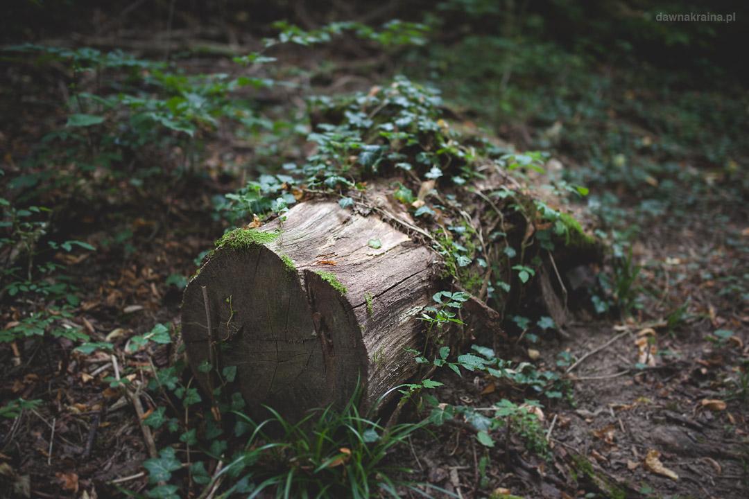 Leśna ścieżka do Zamku Grodziec