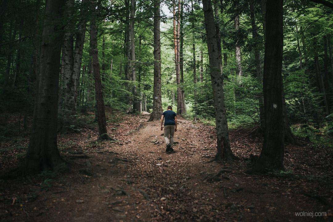Leśna droga prowadząca na górę Jaworze z wieżą widokową