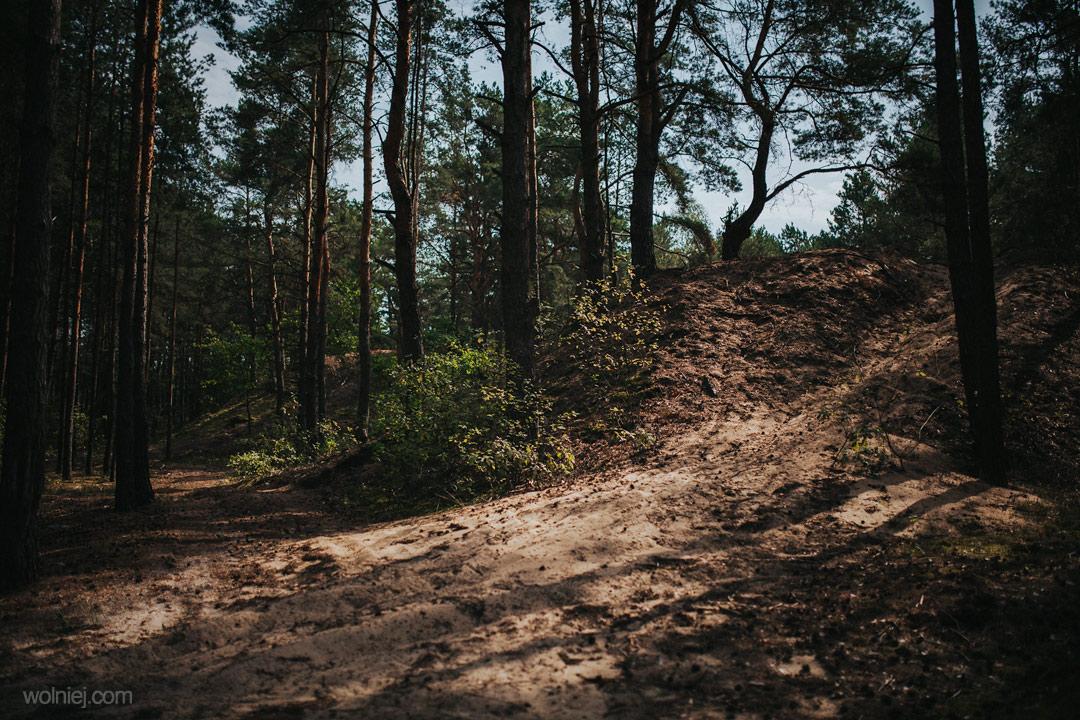 Wydmy Kotliny Chodelskiej w lesie