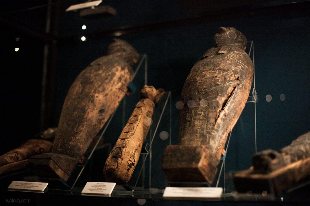 Mumie zwierząt w Muzeum Archeologicznym w Krakowie