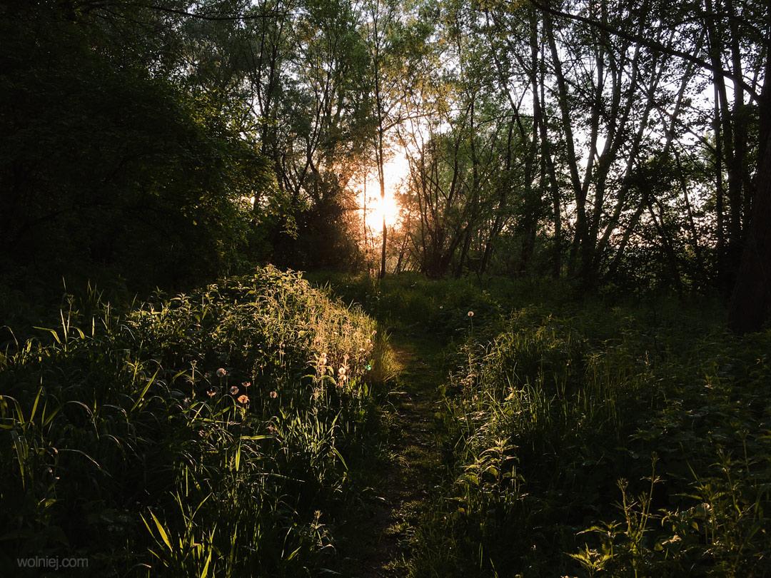 Zarośla na ścieżce wokół Bobrowiska Stary Sącz