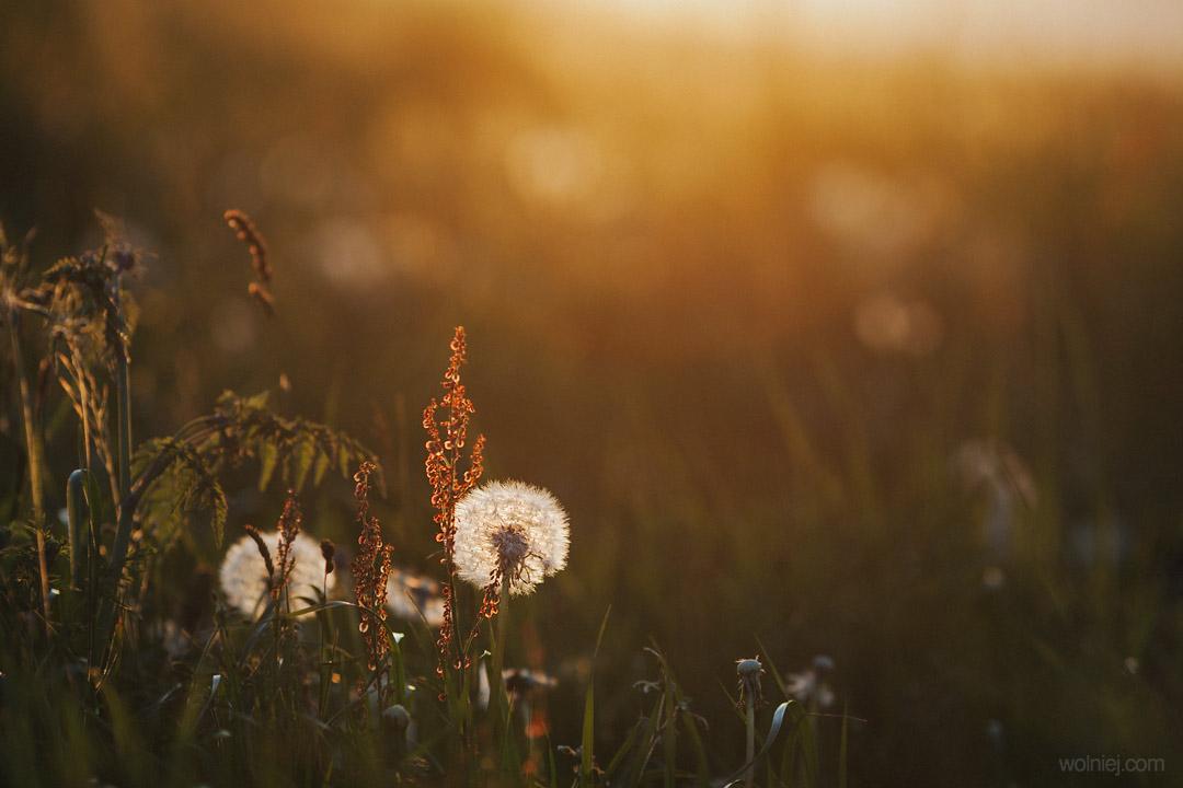 Platforma widokowa Ślimak w Woli Kroguleckiej i pobliskie łąki umożliwiają zrobienie ładnych zdjęć makro